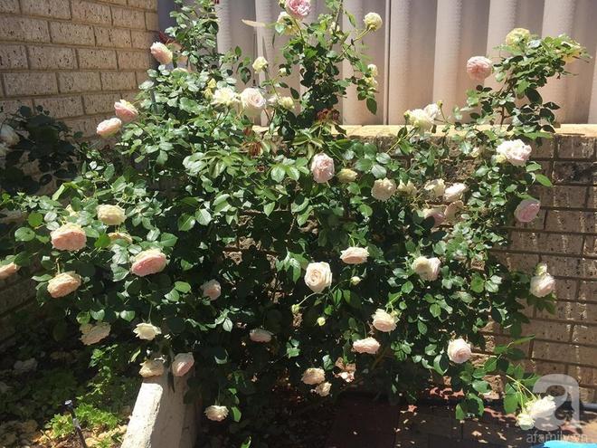 Mất 2 năm gây dựng, vợ chồng người Việt đã biến không gian sống của mình thành ngôi nhà hoa hồng đẹp ngẩn ngơ - Ảnh 15.