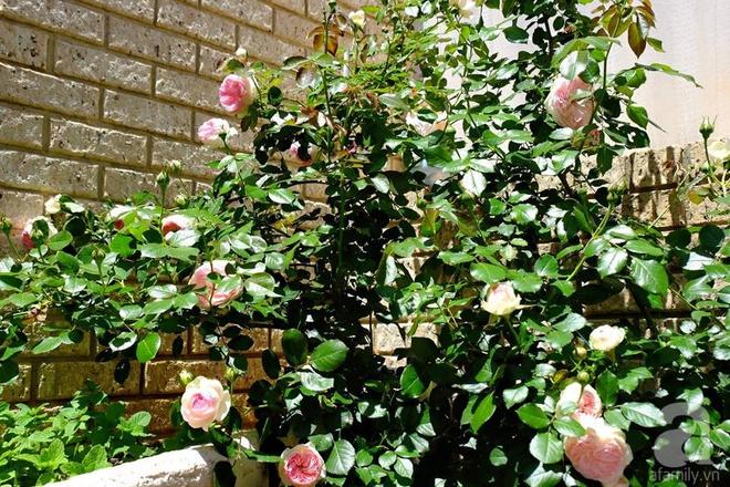 Mất 2 năm gây dựng, vợ chồng người Việt đã biến không gian sống của mình thành ngôi nhà hoa hồng đẹp ngẩn ngơ - Ảnh 17.