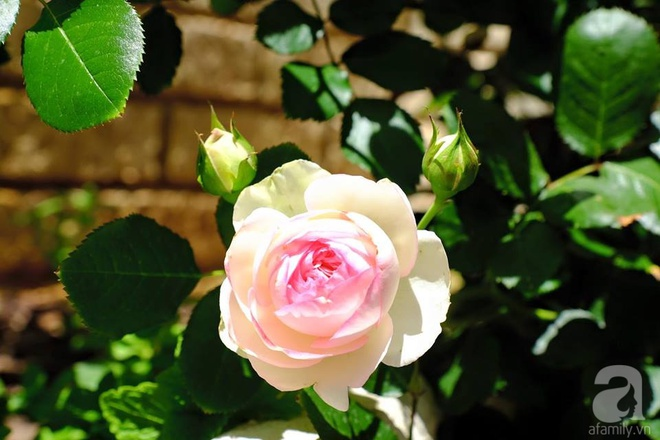 Mất 2 năm gây dựng, vợ chồng người Việt đã biến không gian sống của mình thành ngôi nhà hoa hồng đẹp ngẩn ngơ - Ảnh 18.