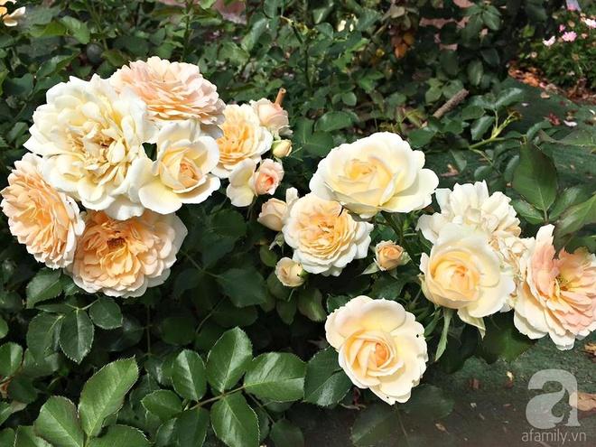 Mất 2 năm gây dựng, vợ chồng người Việt đã biến không gian sống của mình thành ngôi nhà hoa hồng đẹp ngẩn ngơ - Ảnh 19.