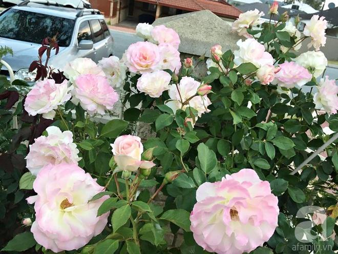 Mất 2 năm gây dựng, vợ chồng người Việt đã biến không gian sống của mình thành ngôi nhà hoa hồng đẹp ngẩn ngơ - Ảnh 21.