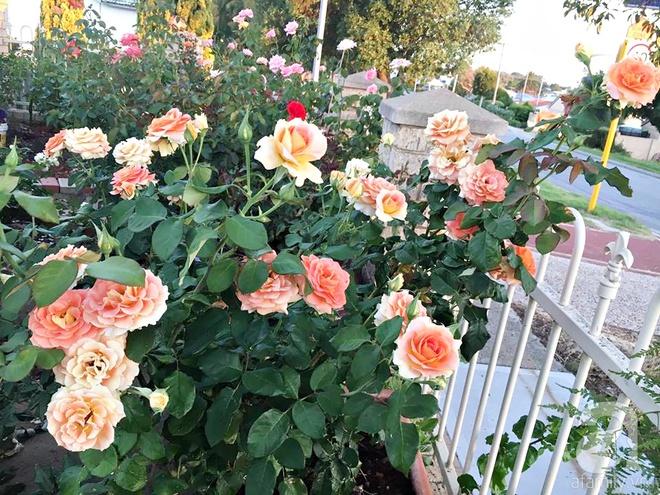 Mất 2 năm gây dựng, vợ chồng người Việt đã biến không gian sống của mình thành ngôi nhà hoa hồng đẹp ngẩn ngơ - Ảnh 22.