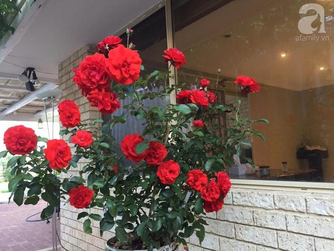 Mất 2 năm gây dựng, vợ chồng người Việt đã biến không gian sống của mình thành ngôi nhà hoa hồng đẹp ngẩn ngơ - Ảnh 30.