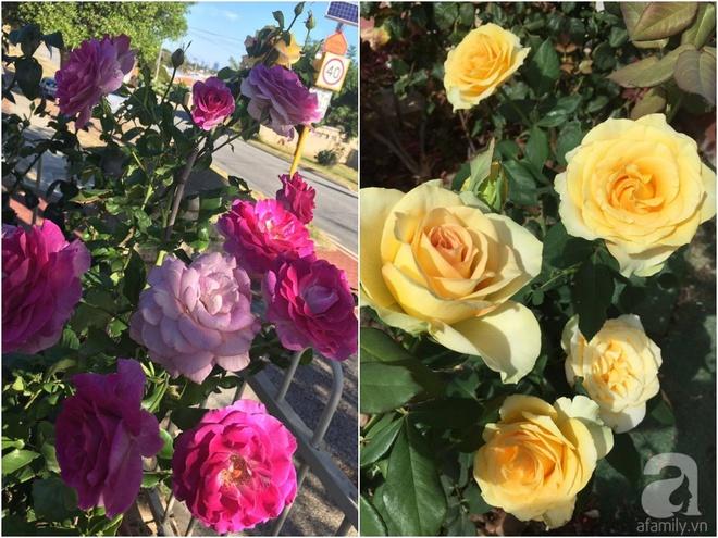 Mất 2 năm gây dựng, vợ chồng người Việt đã biến không gian sống của mình thành ngôi nhà hoa hồng đẹp ngẩn ngơ - Ảnh 32.
