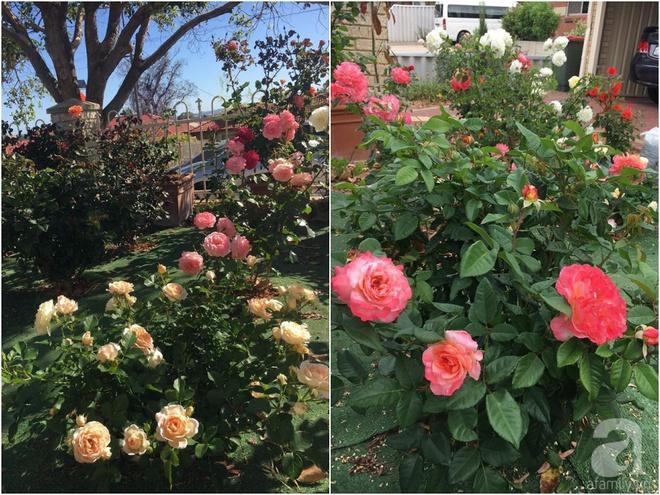 Mất 2 năm gây dựng, vợ chồng người Việt đã biến không gian sống của mình thành ngôi nhà hoa hồng đẹp ngẩn ngơ - Ảnh 36.