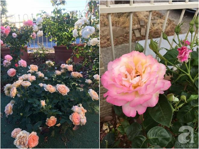 Mất 2 năm gây dựng, vợ chồng người Việt đã biến không gian sống của mình thành ngôi nhà hoa hồng đẹp ngẩn ngơ - Ảnh 37.