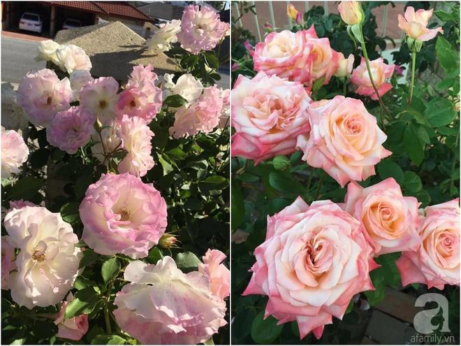 Mất 2 năm gây dựng, vợ chồng người Việt đã biến không gian sống của mình thành ngôi nhà hoa hồng đẹp ngẩn ngơ - Ảnh 38.