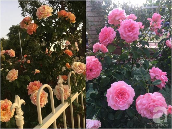 Mất 2 năm gây dựng, vợ chồng người Việt đã biến không gian sống của mình thành ngôi nhà hoa hồng đẹp ngẩn ngơ - Ảnh 40.