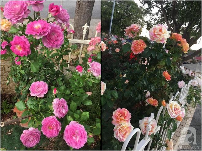 Mất 2 năm gây dựng, vợ chồng người Việt đã biến không gian sống của mình thành ngôi nhà hoa hồng đẹp ngẩn ngơ - Ảnh 42.