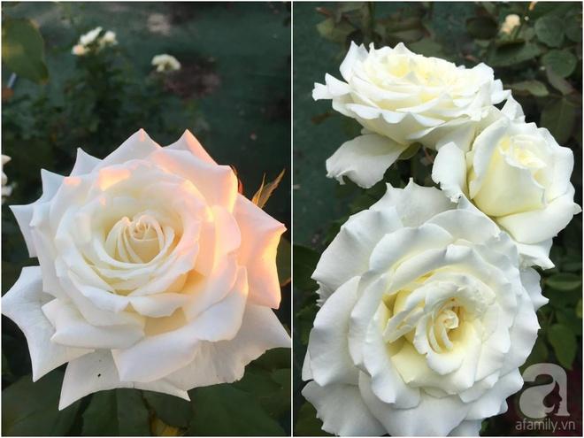 Mất 2 năm gây dựng, vợ chồng người Việt đã biến không gian sống của mình thành ngôi nhà hoa hồng đẹp ngẩn ngơ - Ảnh 43.