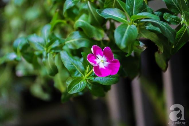 Căn hộ bé xinh chỉ toàn gốm và hoa của mẹ đơn thân ở Định Công, Hà Nội - Ảnh 25.