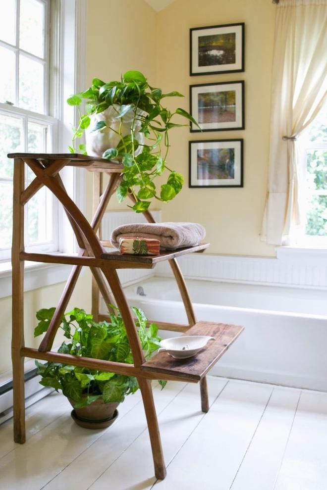 """""""Nhà tắm thực vật"""" – cách đơn giản để nhà tắm thêm mát mẻ trong ngày hè nắng nóng - Ảnh 1."""