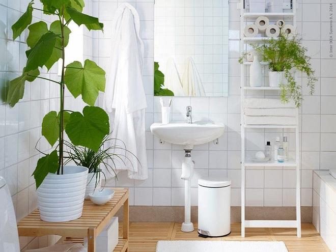 """""""Nhà tắm thực vật"""" – cách đơn giản để nhà tắm thêm mát mẻ trong ngày hè nắng nóng - Ảnh 2."""
