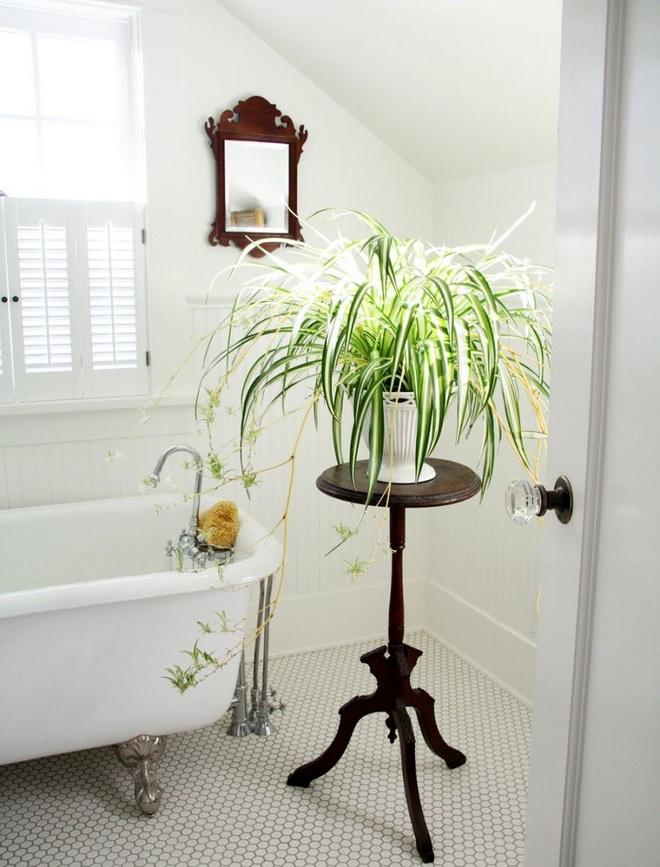 """""""Nhà tắm thực vật"""" – cách đơn giản để nhà tắm thêm mát mẻ trong ngày hè nắng nóng - Ảnh 5."""