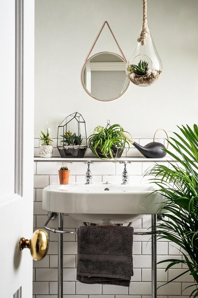 """""""Nhà tắm thực vật"""" – cách đơn giản để nhà tắm thêm mát mẻ trong ngày hè nắng nóng - Ảnh 6."""
