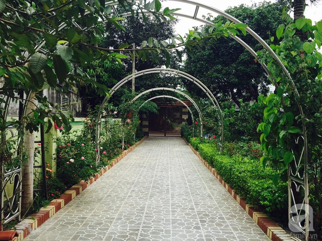 Khu vườn rộng gần nghìn m² đầy hoa và rau xanh của cô giáo dạy toán - Ảnh 4.