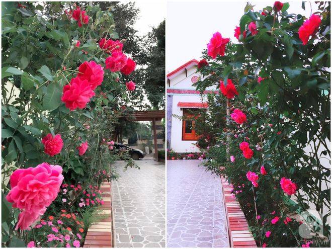 Khu vườn rộng gần nghìn m² đầy hoa và rau xanh của cô giáo dạy toán - Ảnh 6.
