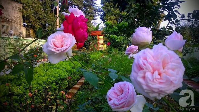 Khu vườn rộng gần nghìn m² đầy hoa và rau xanh của cô giáo dạy toán - Ảnh 8.