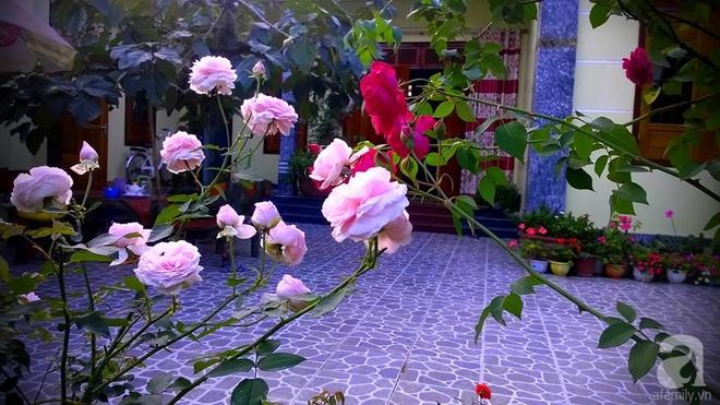 Khu vườn rộng gần nghìn m² đầy hoa và rau xanh của cô giáo dạy toán - Ảnh 9.