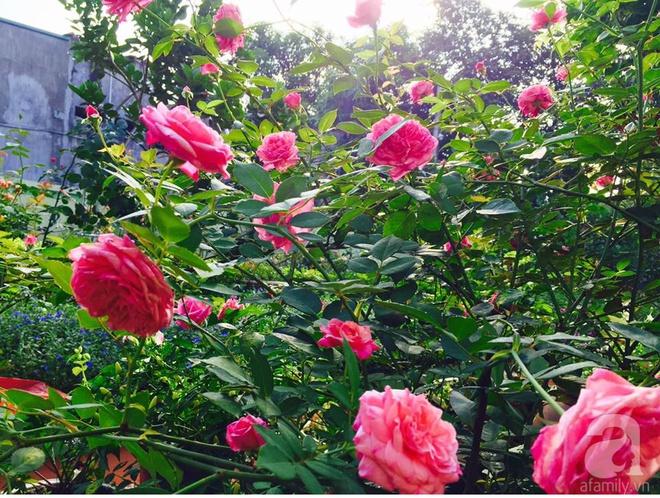 Khu vườn rộng gần nghìn m² đầy hoa và rau xanh của cô giáo dạy toán - Ảnh 13.