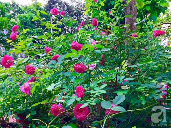 Khu vườn rộng gần nghìn m² đầy hoa và rau xanh của cô giáo dạy toán - Ảnh 15.