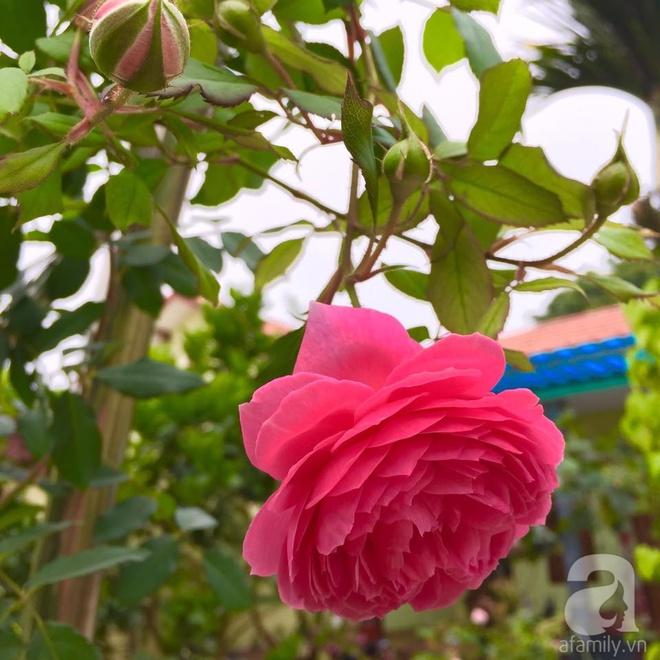 Khu vườn rộng gần nghìn m² đầy hoa và rau xanh của cô giáo dạy toán - Ảnh 17.