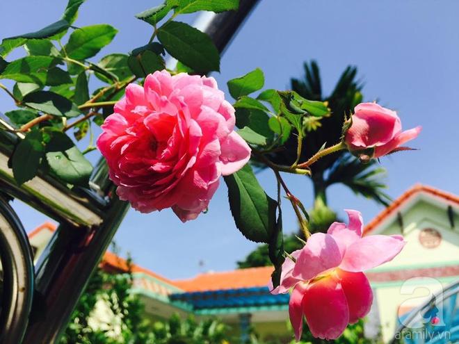 Khu vườn rộng gần nghìn m² đầy hoa và rau xanh của cô giáo dạy toán - Ảnh 18.