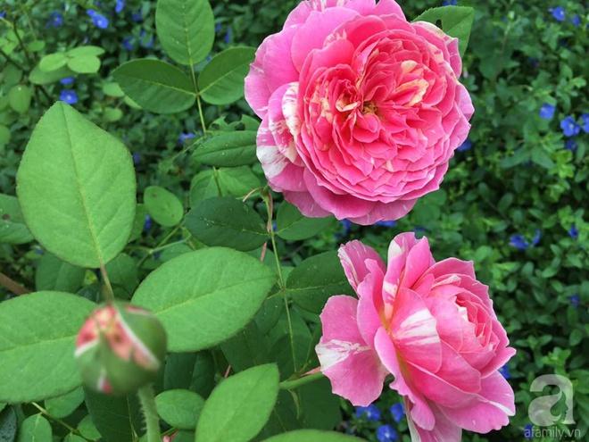 Khu vườn rộng gần nghìn m² đầy hoa và rau xanh của cô giáo dạy toán - Ảnh 19.