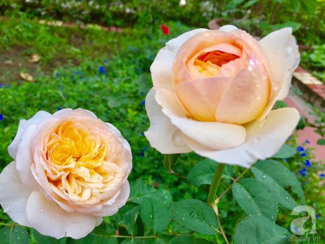 Khu vườn rộng gần nghìn m² đầy hoa và rau xanh của cô giáo dạy toán - Ảnh 21.