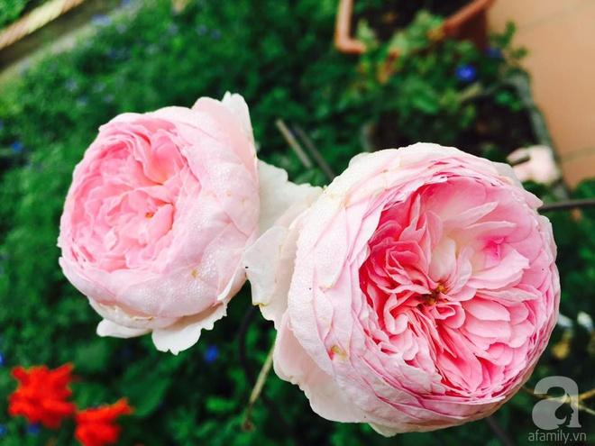Khu vườn rộng gần nghìn m² đầy hoa và rau xanh của cô giáo dạy toán - Ảnh 22.