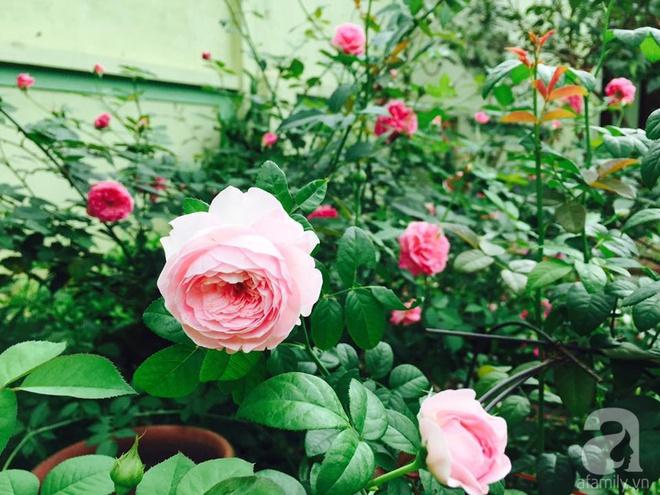 Khu vườn rộng gần nghìn m² đầy hoa và rau xanh của cô giáo dạy toán - Ảnh 27.