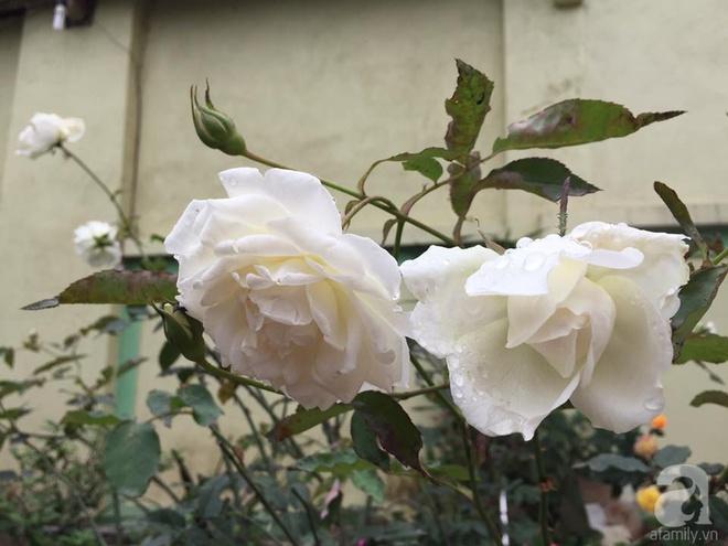 Khu vườn rộng gần nghìn m² đầy hoa và rau xanh của cô giáo dạy toán - Ảnh 30.