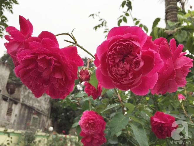 Khu vườn rộng gần nghìn m² đầy hoa và rau xanh của cô giáo dạy toán - Ảnh 31.