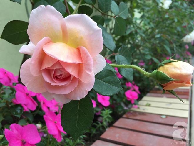 Khu vườn rộng gần nghìn m² đầy hoa và rau xanh của cô giáo dạy toán - Ảnh 32.
