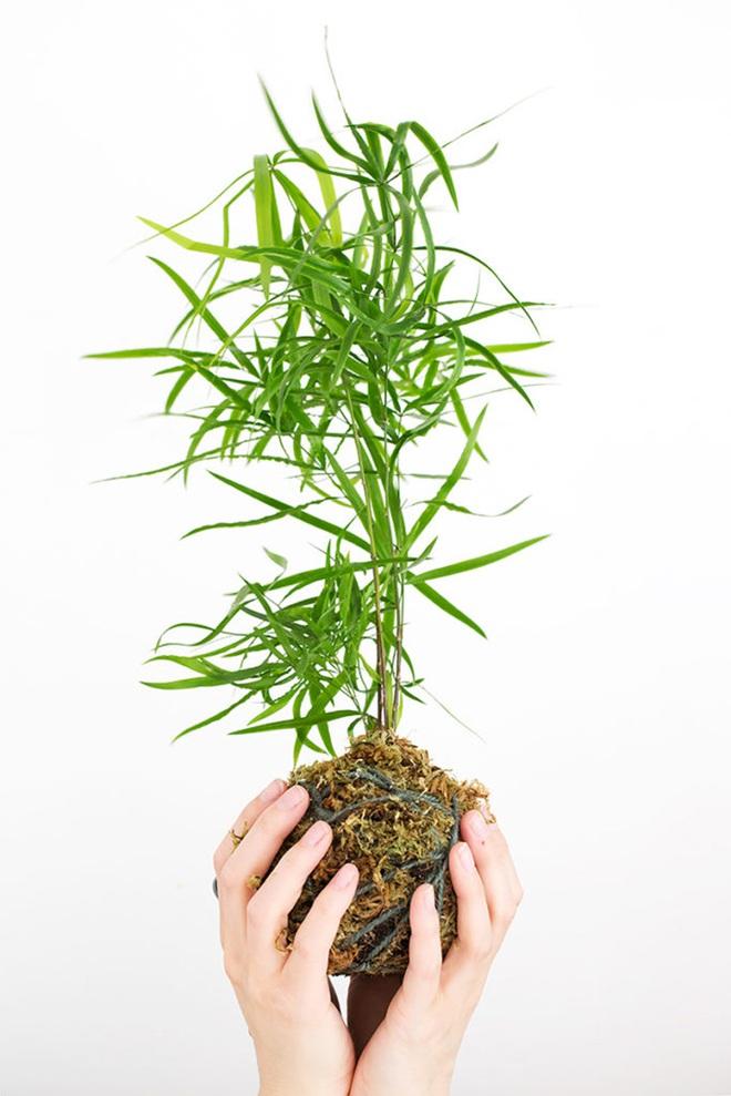 Học cách trồng cây tô điểm nhà theo cách Kokedama của người Nhật - Ảnh 1.