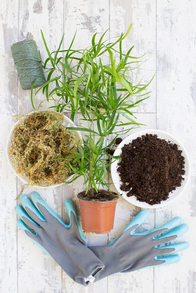Học cách trồng cây tô điểm nhà theo cách Kokedama của người Nhật - Ảnh 2.