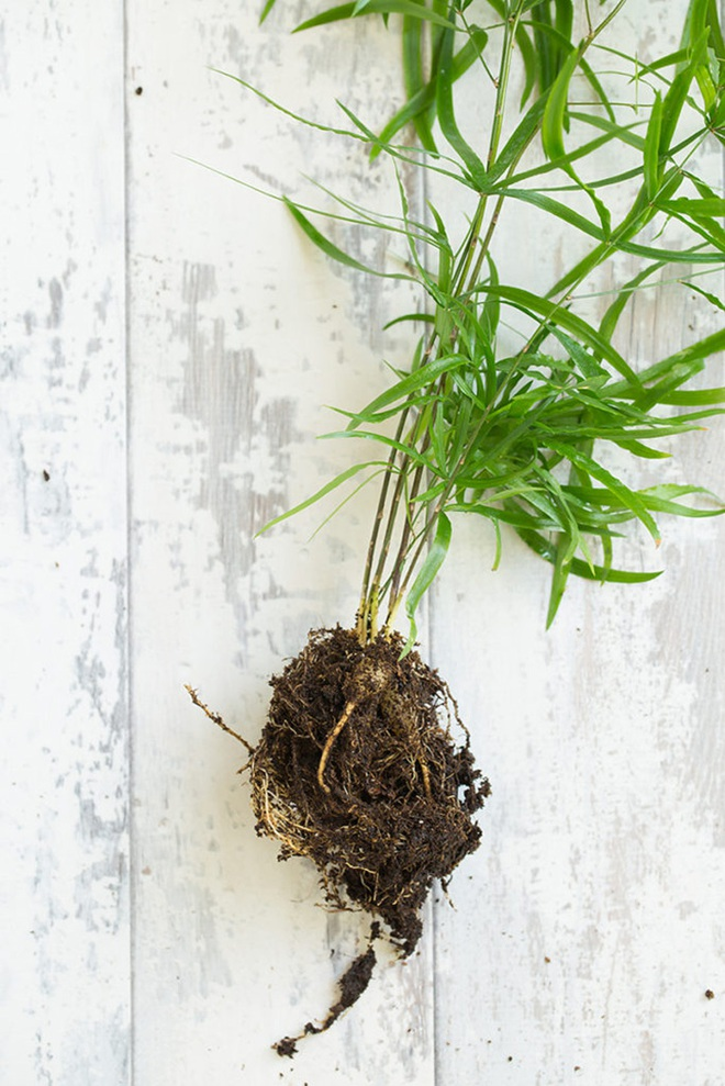 Học cách trồng cây tô điểm nhà theo cách Kokedama của người Nhật - Ảnh 3.