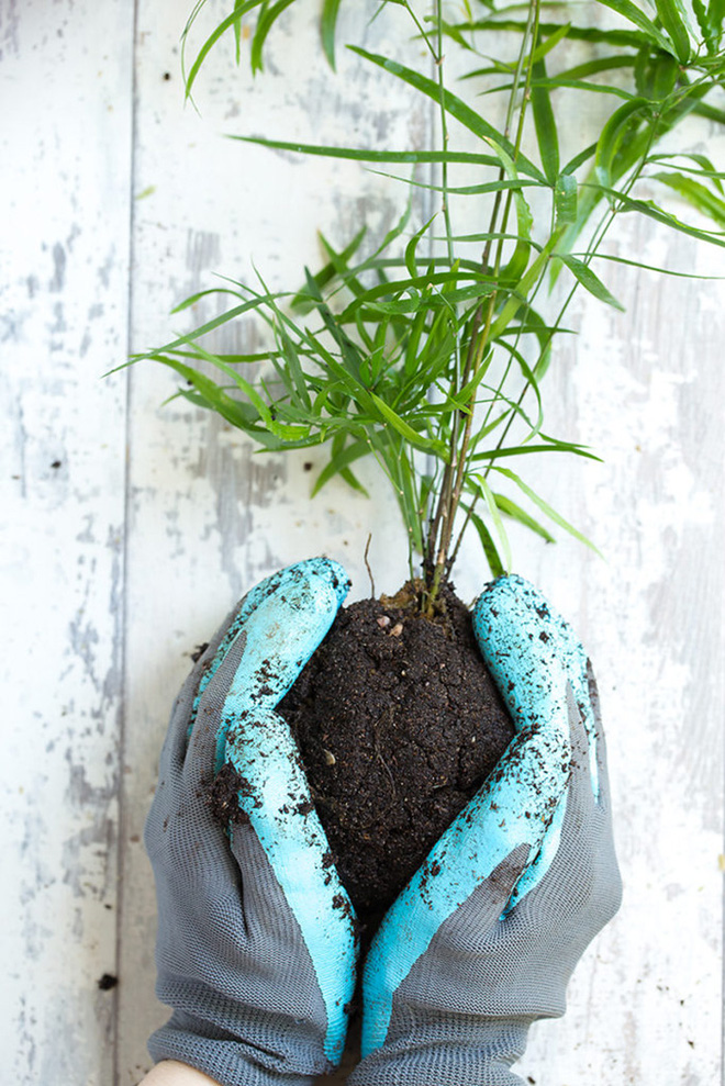 Học cách trồng cây tô điểm nhà theo cách Kokedama của người Nhật - Ảnh 6.