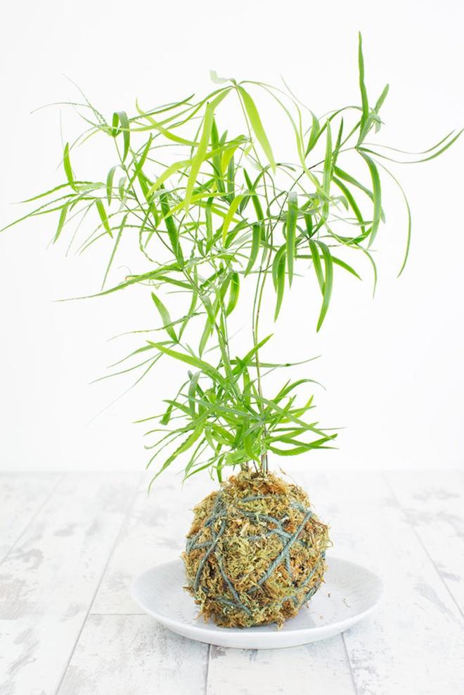 Học cách trồng cây tô điểm nhà theo cách Kokedama của người Nhật - Ảnh 9.