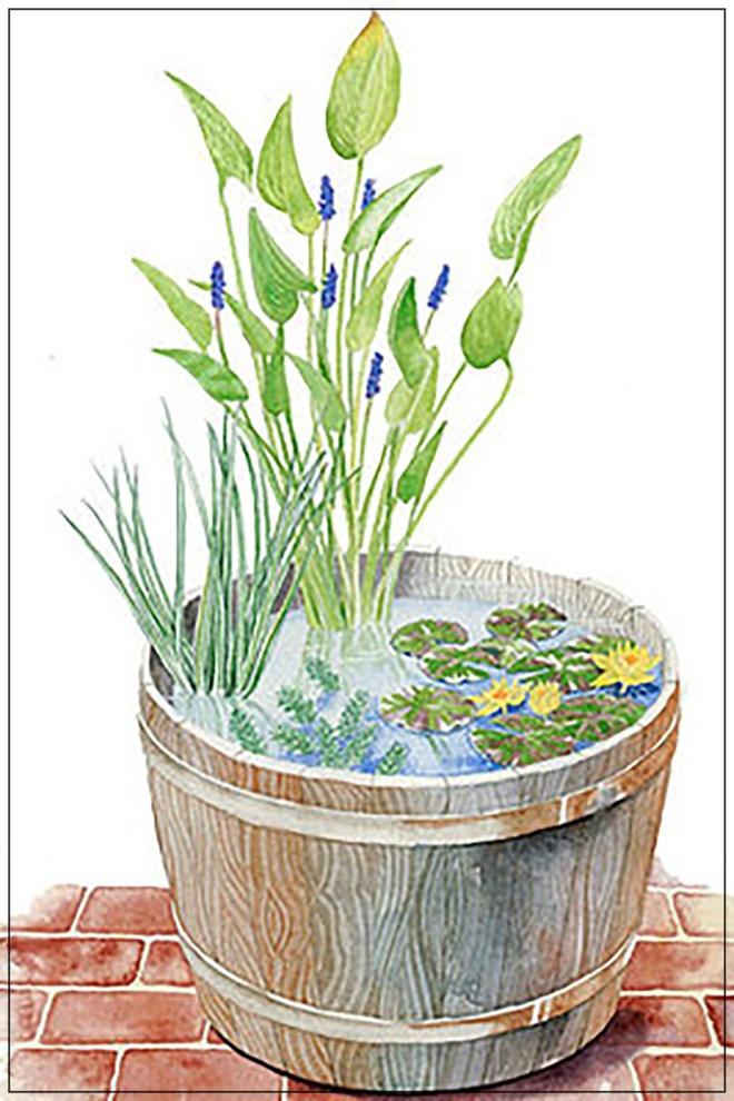 Những thiết kế đẹp bạn có thể học tập để tạo sân vườn xinh tại nhà - Ảnh 5.
