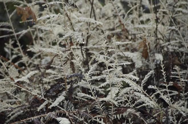 Bí ẩn loài cây ma không cần quang hợp khiến các nhà khoa học đau đầu suốt 100 năm qua - Ảnh 4.