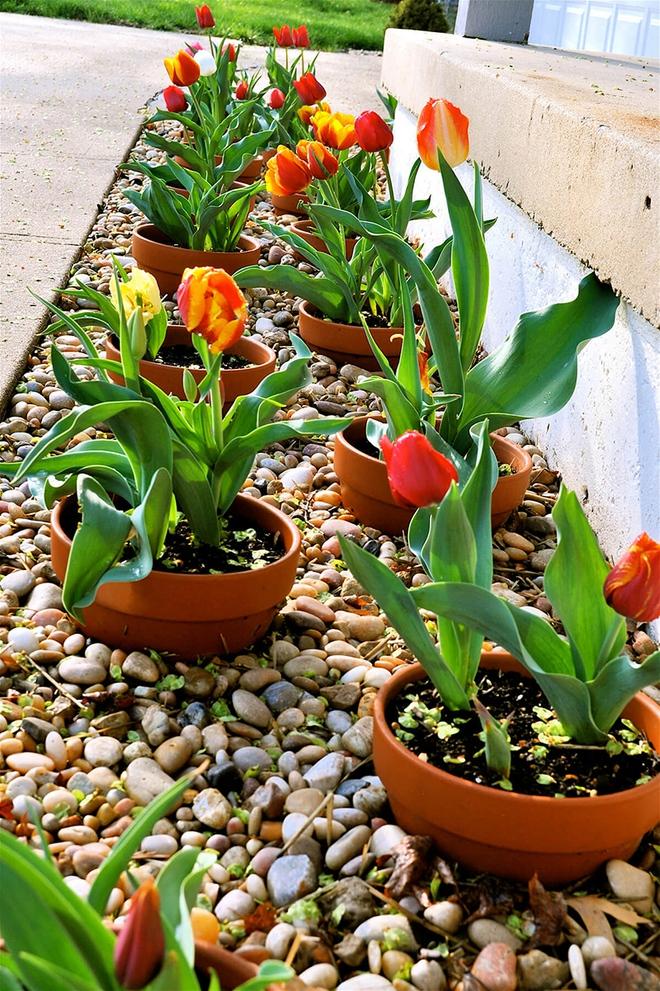 20 cách tạo luống hoa đẹp như chốn mê cung cho khu vườn mùa hè - Ảnh 18.