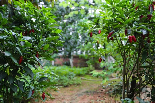 Sau mọi ánh hào quang của sân khấu, NSND Thanh Hoa sống bình yên bên nhà vườn rộng 1000m² - Ảnh 25.