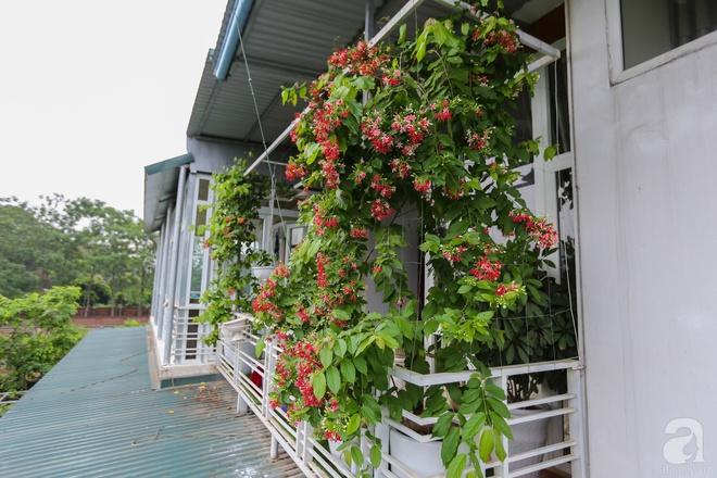 Sau mọi ánh hào quang của sân khấu, NSND Thanh Hoa sống bình yên bên nhà vườn rộng 1000m² - Ảnh 26.