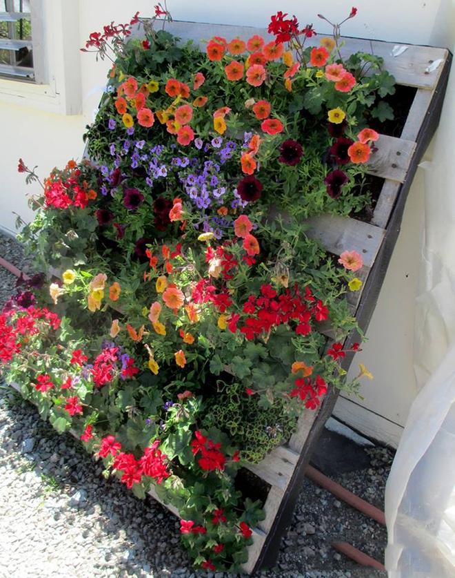 Những cách đơn giản để tạo nên khu vườn đẹp tuyệt từ gỗ pallet - Ảnh 9.