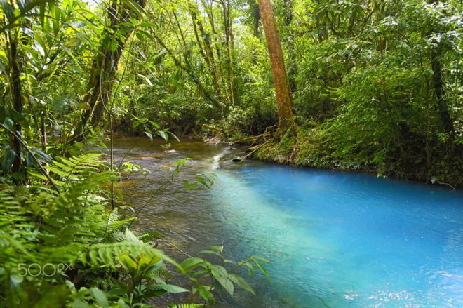 Bí mật của dòng sông ngọc lam huyền ảo từng đánh lừa các nhà khoa học - Ảnh 6.
