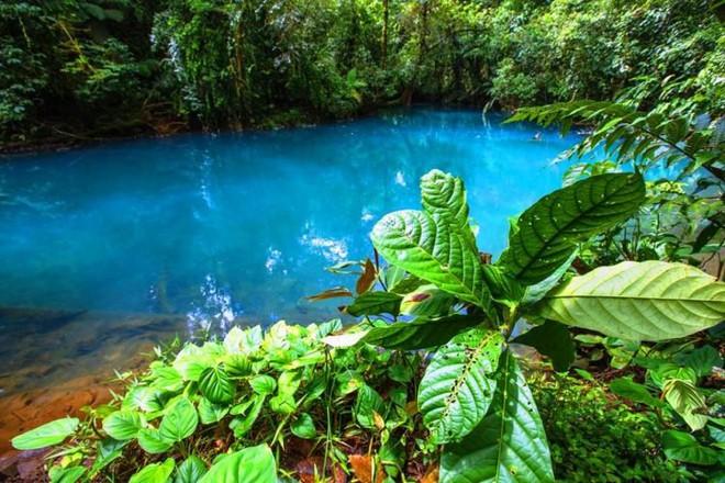 Bí mật của dòng sông ngọc lam huyền ảo từng đánh lừa các nhà khoa học - Ảnh 7.