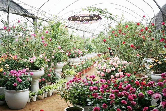 Nữ thạc sỹ nông nghiệp sở hữu các khu vườn hoa hồng với 600 giống hồng nội và ngoại đủ màu sắc - Ảnh 3.