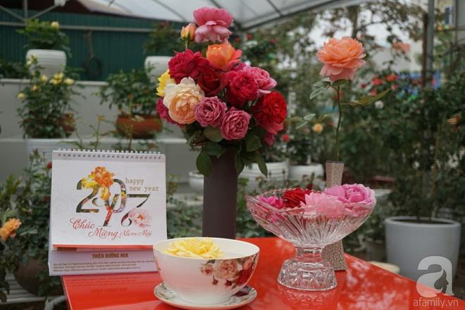 Nữ thạc sỹ nông nghiệp sở hữu các khu vườn hoa hồng với 600 giống hồng nội và ngoại đủ màu sắc - Ảnh 8.