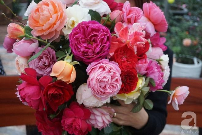 Nữ thạc sỹ nông nghiệp sở hữu các khu vườn hoa hồng với 600 giống hồng nội và ngoại đủ màu sắc - Ảnh 11.